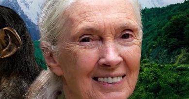 jane goodall 9 390x205 - Jane Goodall Biography - life Story, Career, Awards, Age, Height