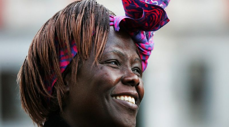 wangari maathai 3 800x445 - Wangari Maathai Biography - life Story, Career, Awards, Age, Height
